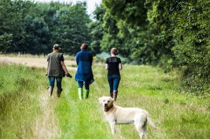 civray-dog-walking