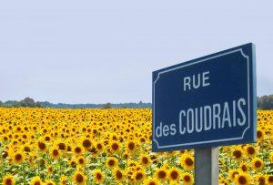 rue des coudrais Civray